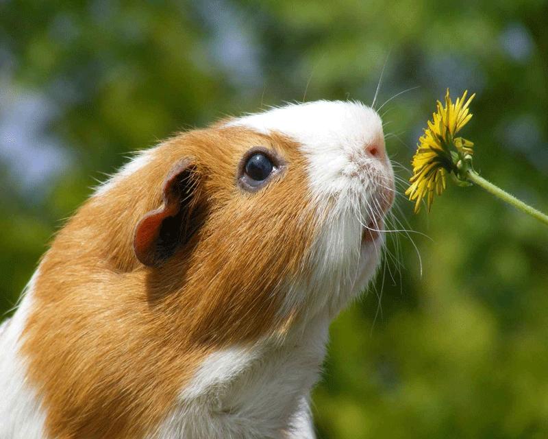 مسابقه پیامکی در زمینه حیوانات و گیاهان